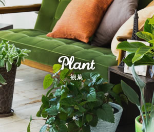 Plant 観葉