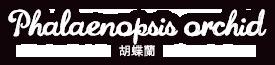 Phalaenopsid Orchid 胡蝶蘭