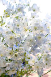 水色のデルフィニウムの花