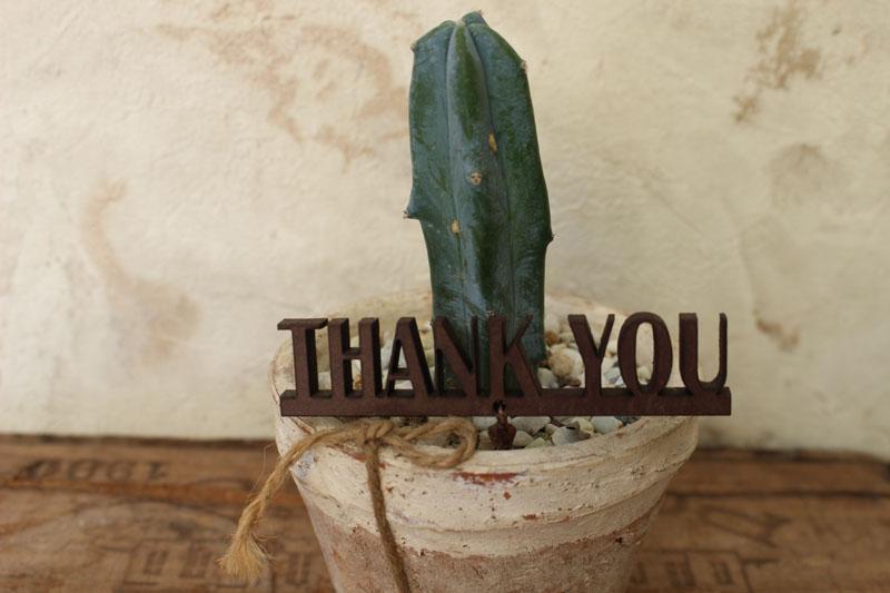メッセージピック「THANKYOU」付きミニサボテン