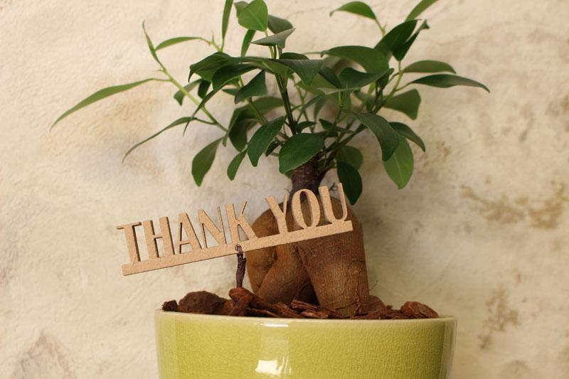 木こりのメッセージ入りガジュマルの観葉植物