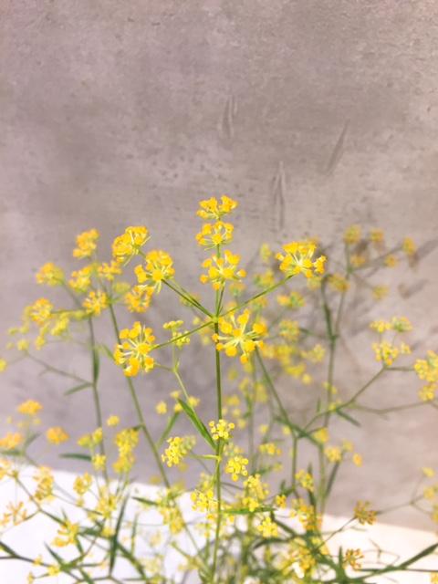 ミシマサイコ切り花