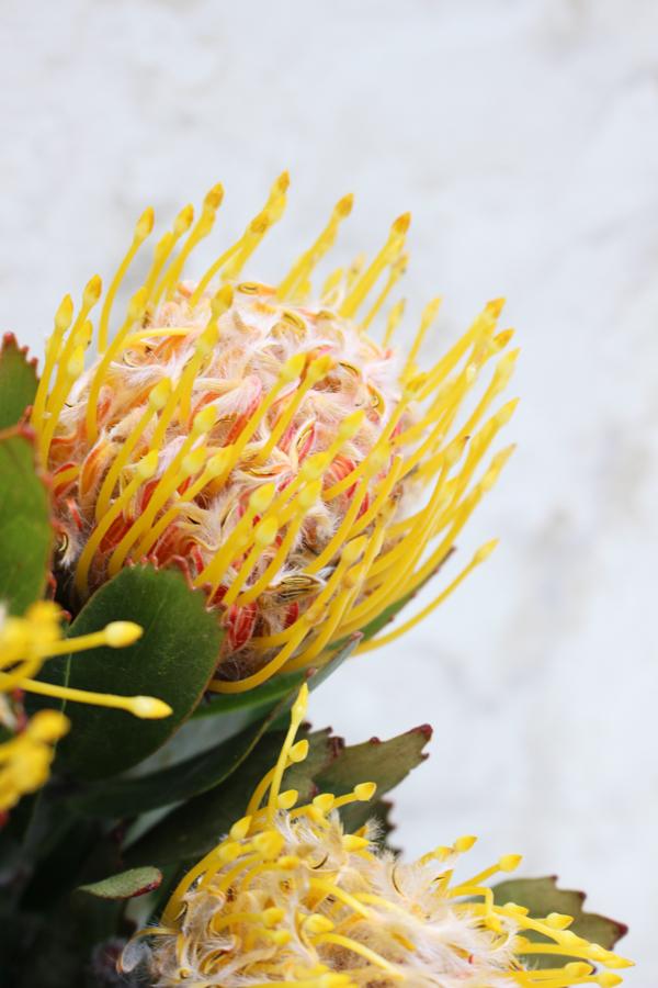 個性的な形で面白いお花です!